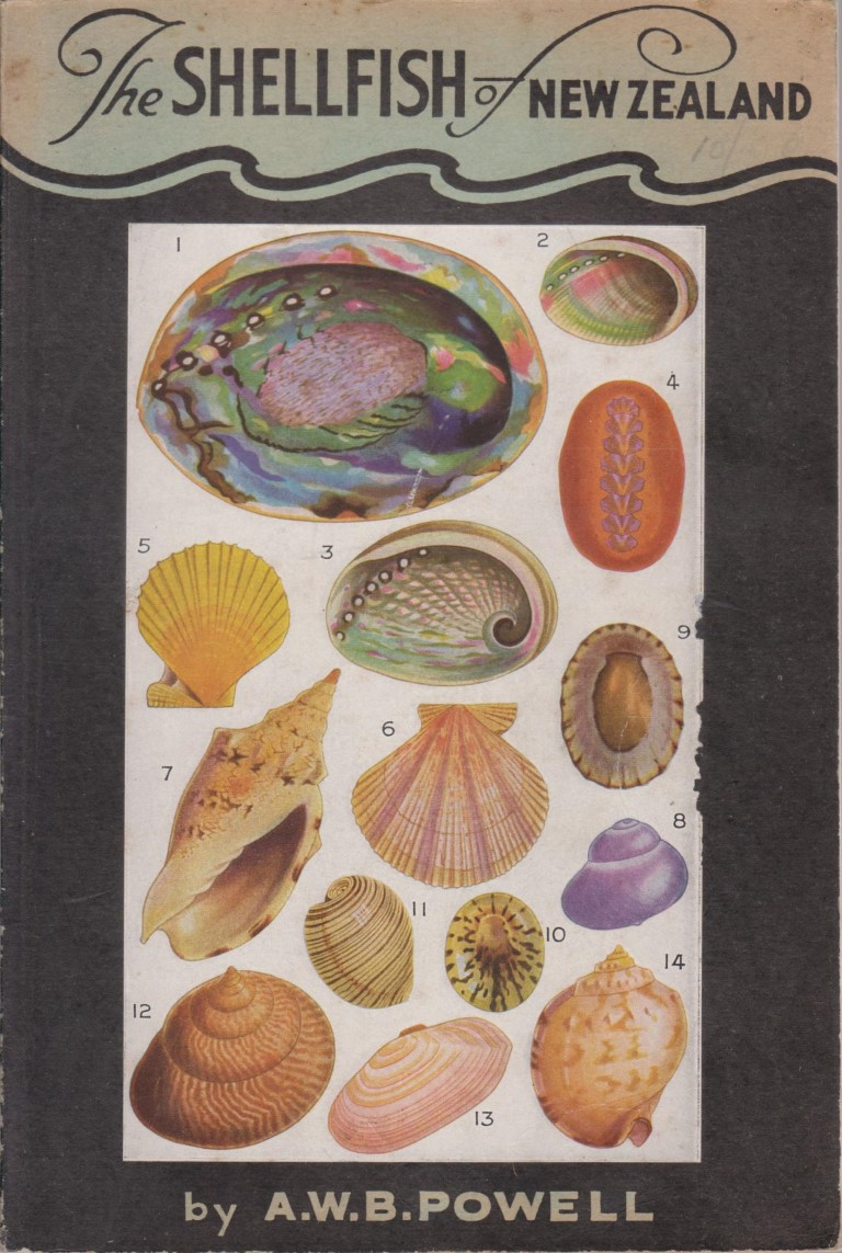 cover image of The Shellfish of New Zealand an illustrated handbook for sale in New Zealand