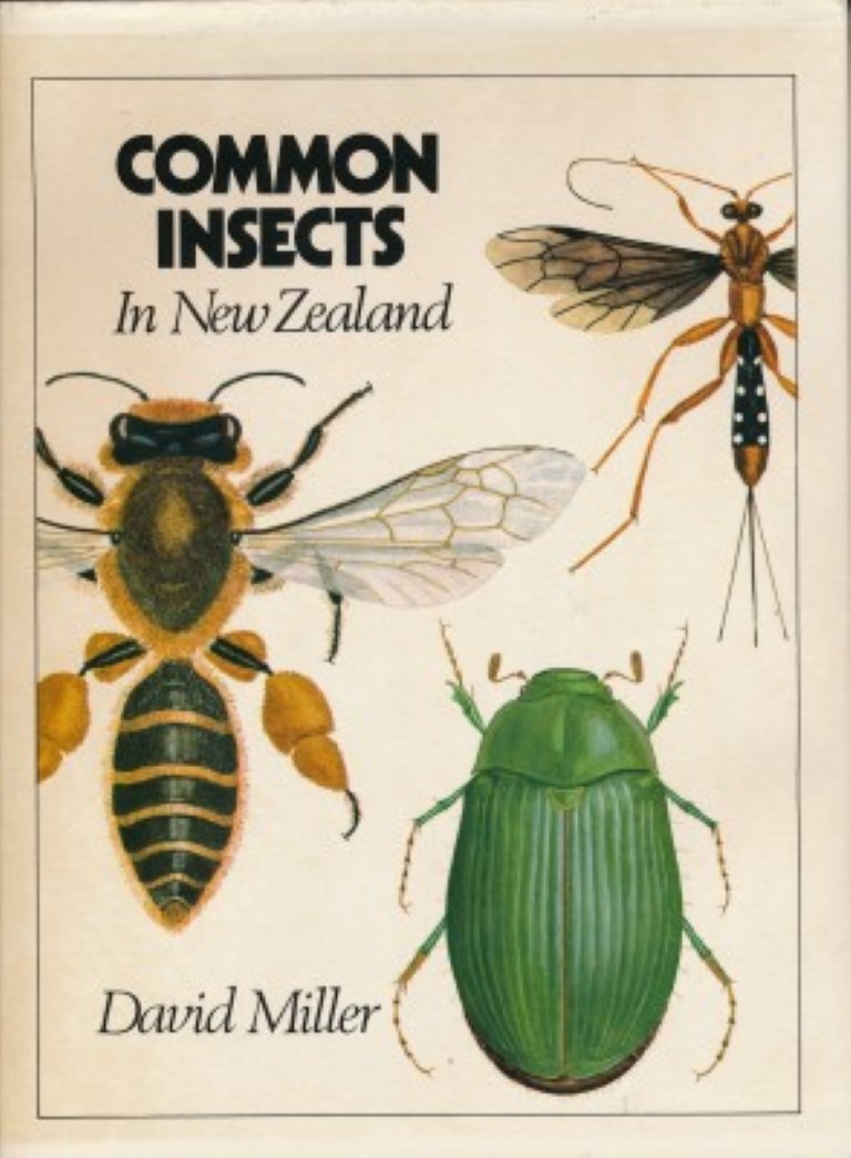 cover image of Common Insects in New Zealand